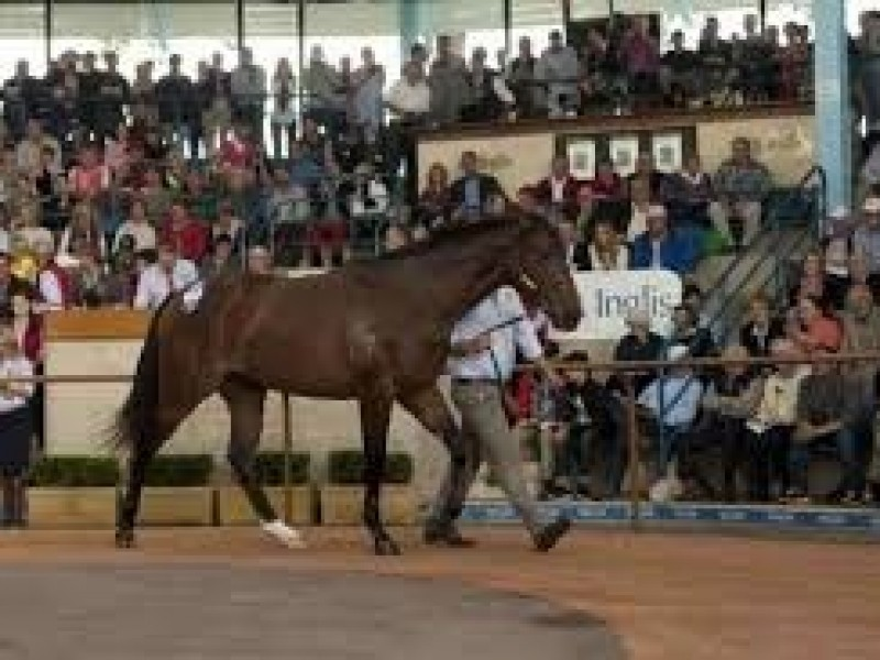Digital Easter Yearling Sale Schedules Test Run